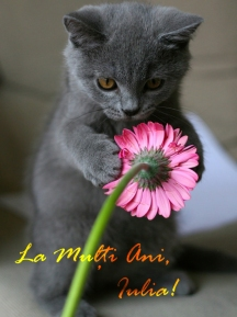 kitten_with_pink_flower copy